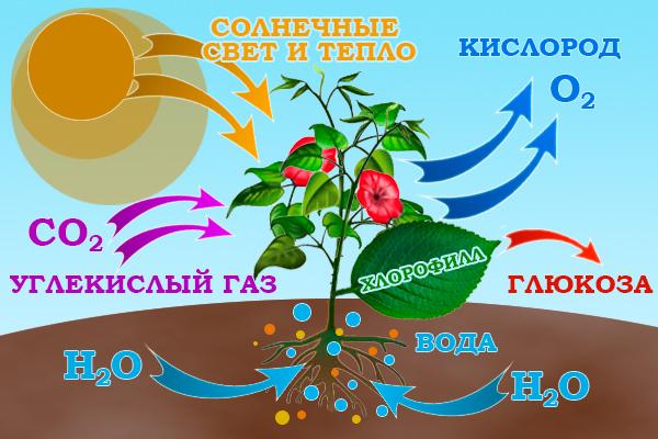 Растения берут из почвы воду с
