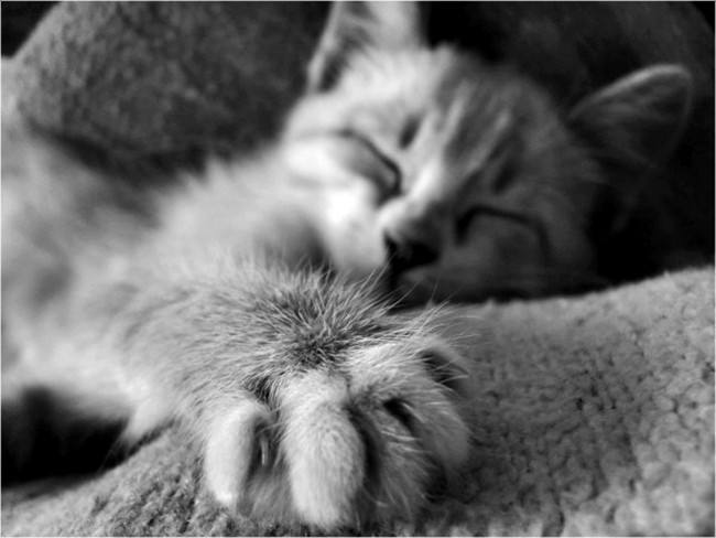 Коты вибрируют