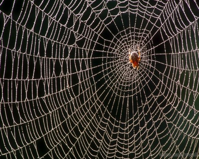 Картинки по запросу пауки картинки